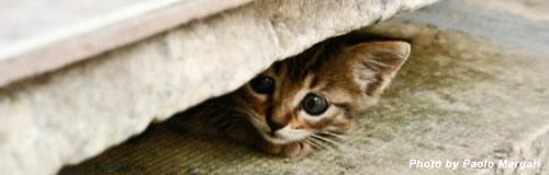 猫めくりカレンダーの「カミン」が破産開始決定受け倒産