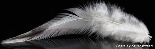 名古屋の羽毛布団製造「三陽羽毛」が破産決定受け倒産