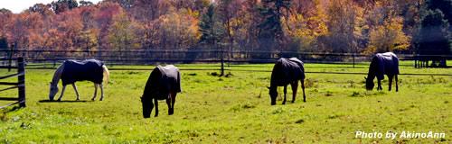 トウショウ牧場が10月で閉鎖、トウショウボーイ輩出の名門