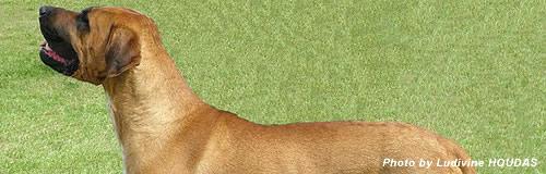 高知の「土佐闘犬センター」運営会社に破産決定