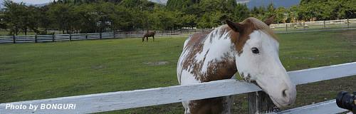 岐阜のテーマパーク「牧歌の里」が事業再生ADR手続を申請