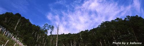 一般社団法人「京都府森と緑の公社」が民事再生法申請へ