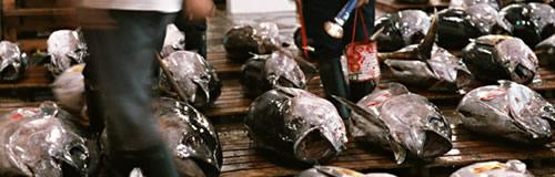 静岡・清水の「音代漁業」が民事再生法申請、負債30億円
