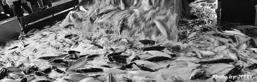 札幌の水産物加工「丸三北栄商会」が民事再生法申請