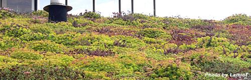東京・下落合の緑化建材販売「国際環境デザイン」に破産決定