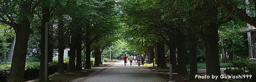 15年卒の大学生就職内定率(12月)は80.3%、3.6%改善