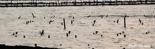 鹿児島の養殖業「四男水産」が自己破産を申請し倒産へ